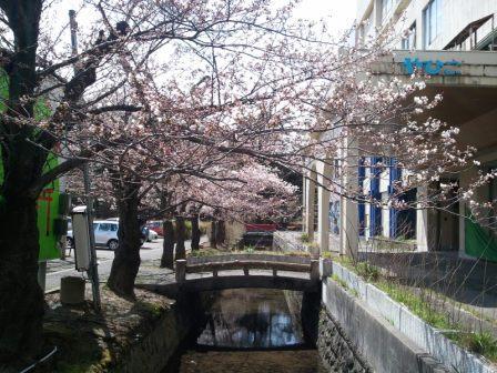 20130411sakura2.jpg