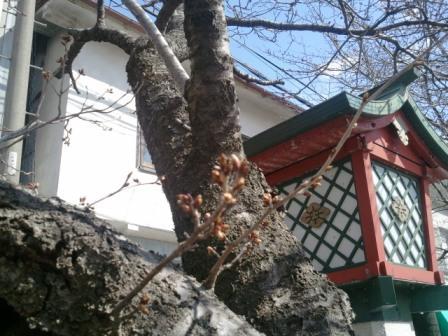 2011-03-18 13.02.11.jpg