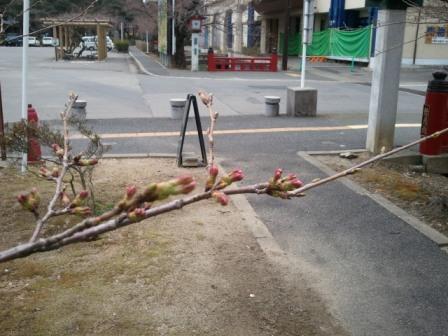 2011-04-11 10.26.01.jpg