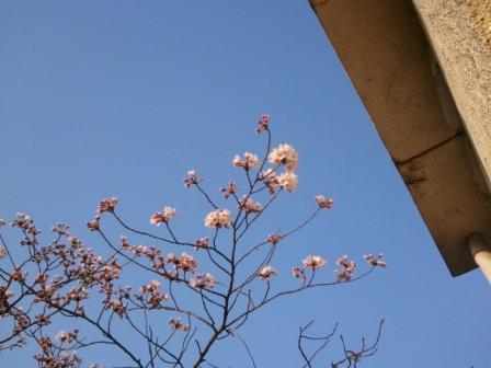 2011-04-15 06.46.30.jpg