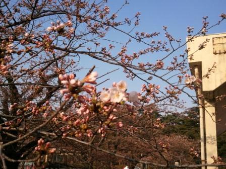 2011-04-15 06.46.04.jpg