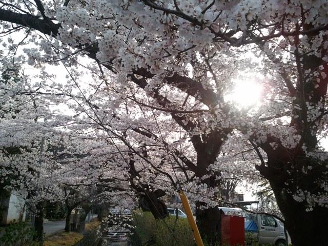 2011-04-21 06.40.13.jpg