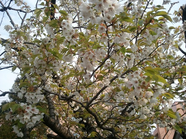 2011-04-27 07.10.01.jpg