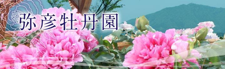 main_new.jpg