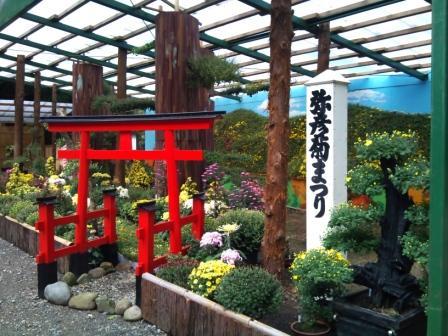 菊祭り2010.jpg
